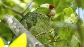 高清晰绿色金刚鹦鹉鸟壁纸