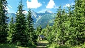 高清晰绿色森林休息凉亭壁纸