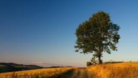 黄草绿树路壁纸