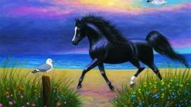 高清晰黑色骏马鸽子美景
