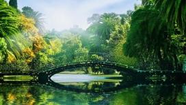 晴天下的绿色热带拱桥湖公园壁纸