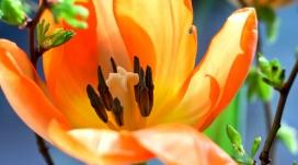 复活节花背景