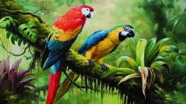 可爱的热带鹦鹉