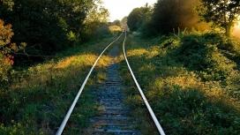 阳光下华丽森林铁路