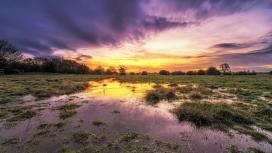 迷人的沼泽紫色天空
