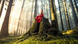 森林树桩上的姑娘