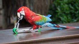 玩滑板的鹦鹉鸟