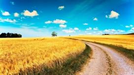 高清晰金黄色的稻田路壁纸