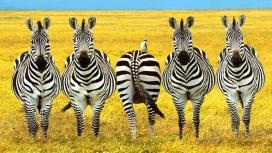 一群奔跑的斑马