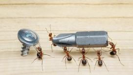 拧螺丝的一群蚂蚁