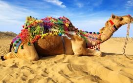 高清晰沙漠中的骆驼壁纸
