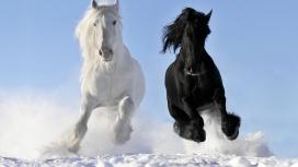 高清晰雪地中奔跑的黑马与白马壁纸