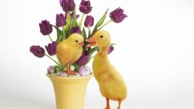 复活节派克-郁金香花与鸭子