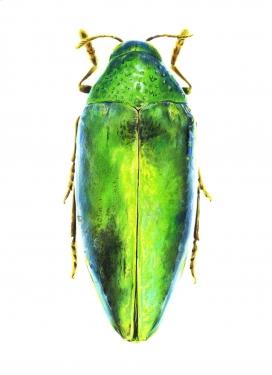 奥迪杂志-昆虫汇
