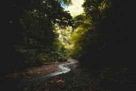 高清晰黑暗森林中的小溪壁纸
