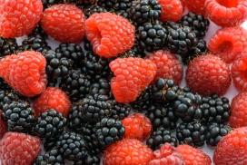 高清晰黑红野生山莓水果