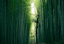 高清晰绿色竹林小路壁纸