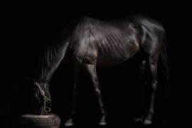 马厩吃草的黑马
