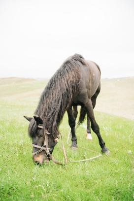 吃草的黑马