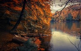 秋季枫树林的小河