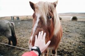 触摸棕色马匹的女子