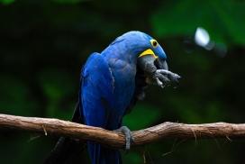 树枝上的蓝色金刚鹦鹉鸟
