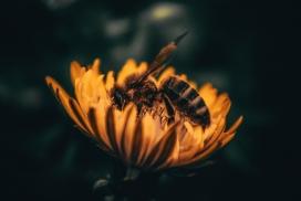 https://www.2008php.com/花丛中采蜜的蜜蜂