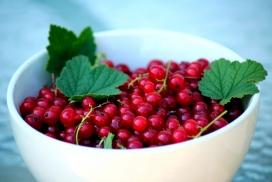 装在瓷器碗中的茶藨子红色浆果