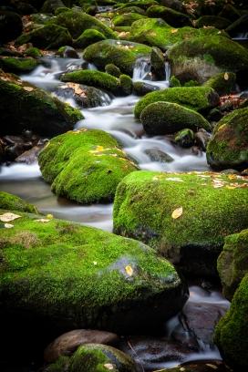 绿色苔藓石头的小溪