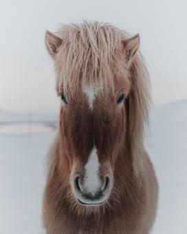 漂亮的矮种马