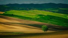 绿色山丘的树