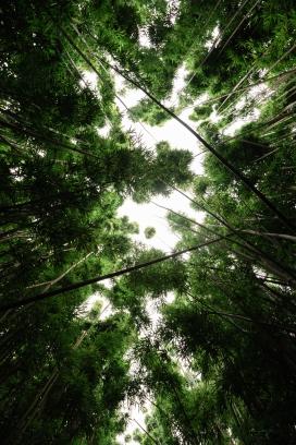仰拍的竹林天空