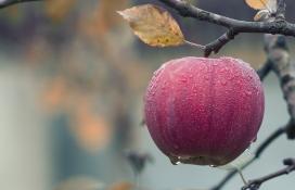 带露珠的苹果
