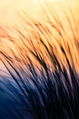 抽象唯美的芦苇
