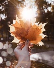 给阳光献叶子礼物的手
