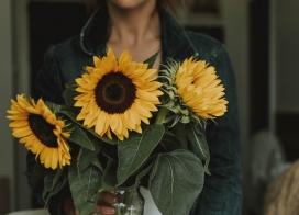 手捧向日葵花瓣