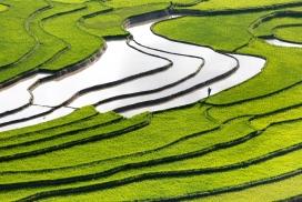 绿色水稻梯田