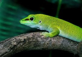树干上可爱的绿色蜥蜴