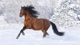 雪地中奔跑的骏马