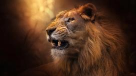 年轻露齿的雄狮