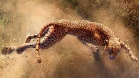 猎物的美洲豹