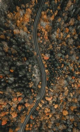美丽的蛇形森林公路