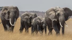象群家族图