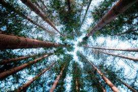 仰拍的森林树木