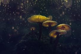 梦幻的蘑菇