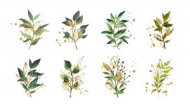 https://www.2008php.com/水彩风格花卉植物园矢量插图