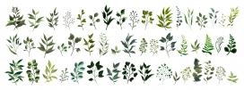 https://www.2008php.com/春天水彩风树叶植物素材EPS下载