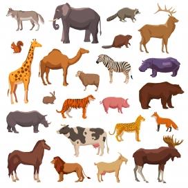 非洲野生大动物集素材下载