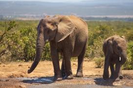 大象妈妈与宝宝