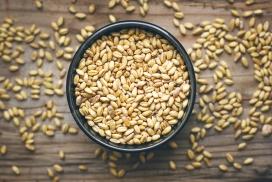 葵瓜子燕麦米写真图